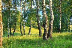 Paysage rural d'été avec la forêt et le pré sur le coucher du soleil bouleau photographie stock libre de droits