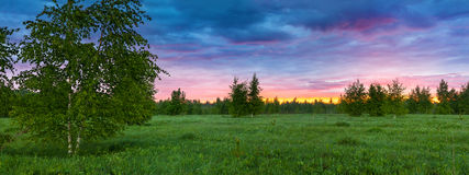 Paysage rural d'été avec la forêt, un pré et le brouillard au lever de soleil Photo stock