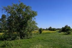Paysage rural d'été ensoleillé avec la rivière, les champs, les arbres et le ciel bleu photo libre de droits
