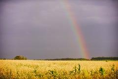 Paysage rural d'arc-en-ciel avec le champ de blé image stock