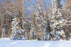 Paysage rural d'hiver avec la forêt et les arbres couverts de neige photo libre de droits