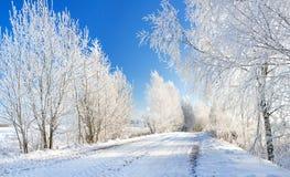 Paysage rural d'hiver avec la forêt et la route photo libre de droits