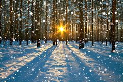 Paysage rural d'hiver avec la forêt, le soleil et la neige photo libre de droits