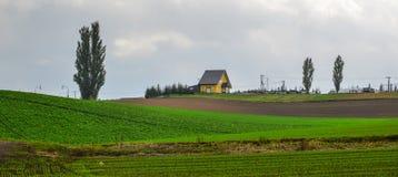 Paysage rural dans Biei, Japon photo libre de droits