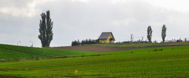 Paysage rural dans Biei, Japon image libre de droits