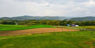 Paysage rural dans Biei, Japon images libres de droits