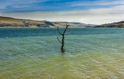 Paysage rural de lac avec des roseaux, faune et avec les cieux bleus et les nuages Photo stock