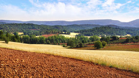 Paysage rural de nature pittoresque avec des champs Photo stock