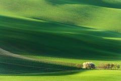 Paysage rural de nature de ressort avec les arbres fleurissants de floraison sur Rolling Hills onduleuses vertes Lumière étonnant images stock