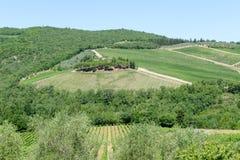 Paysage rural des vignobles de chianti sur la Toscane image libre de droits
