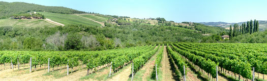 Paysage rural des vignobles de chianti sur la Toscane photographie stock libre de droits