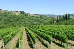 Paysage rural des vignobles de chianti sur la Toscane photo stock