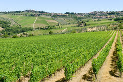Paysage rural des vignobles de chianti sur la Toscane images libres de droits