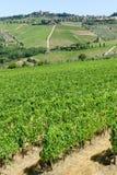 Paysage rural des vignobles de chianti sur la Toscane photographie stock