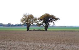 Paysage rural, deux arbres au milieu d'un champ images stock
