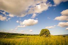 Paysage rural en vallées de Yorkshire, Angleterre, R-U image stock