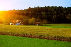 Paysage rural lumineux photographie stock