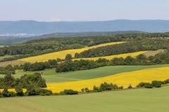 Paysage rural multicolore, champs agricoles Ciel bleu, blé vert, viol jaune photo stock