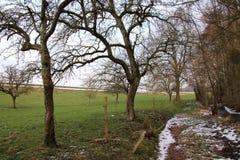 Paysage rural, promenade dans les bois en hiver photo stock