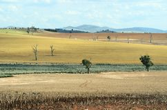 Paysage rural sec de ferme dans NSW occidental central, Australie photographie stock libre de droits