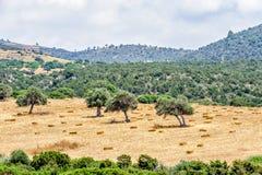 Paysage rural typique de la Chypre image stock