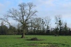 Paysage rural, un arbre au milieu d'un champ photographie stock libre de droits