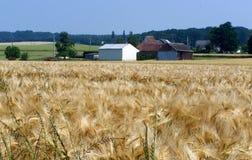 Paysage rural, un champ de blé en été images libres de droits