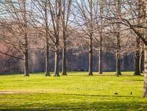 Paysage sans feuilles de ressort Photographie stock