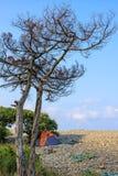 Paysage scénique de ciel bleu de plage pierreuse de mer avec l'arbre sec à la côte de la Mer Noire le jour ensoleillé Paysage de  Photos stock