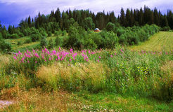 Paysage sibérien d'été photographie stock