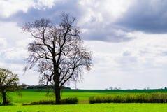 Paysage - silhouette d'arbre dans Yorkshire rural sur un fond dramatique de ciel nuageux Photo libre de droits