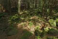 Paysage, sommet, pierres, mousses, mousse, étonnant, arbres, sur le dessus photo libre de droits