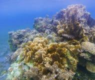 Paysage sous-marin avec le mur de corail Photo sous-marine de corail Texture de bord de la mer Photos stock