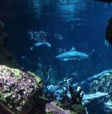 Paysage sous-marin avec le récif coralien et les poissons photo libre de droits