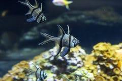 Paysage sous-marin avec le récif coralien et les poissons photos libres de droits
