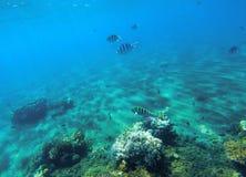 Paysage sous-marin avec le récif coralien Formes de corail dures Poissons de corail sous-marin Photos libres de droits