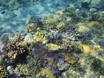 Paysage sous-marin de bord de la mer tropical Vue colorée de récif coralien Photo sous-marine de récif coralien Images libres de droits