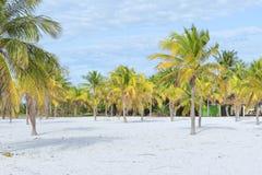 Paysage sur une plage exotique avec des palmiers Images libres de droits
