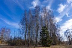 Paysage tôt de ressort avec les arbres à feuilles caduques grands photographie stock