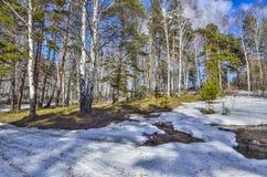 Paysage tôt de ressort dans la forêt avec la neige et le ruisseau de fonte photo libre de droits