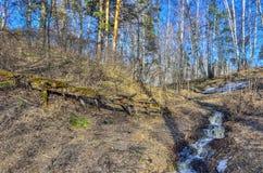 Paysage tôt de ressort dans la forêt avec la neige et les ruisseaux de fonte images stock
