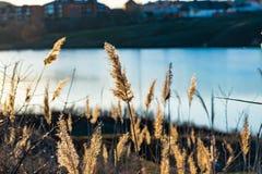 Paysage tôt de ressort, dans la région de Rostov dans la ville de Shakhty, sur la rivière de Grushevka Coucher du soleil ensoleil photographie stock