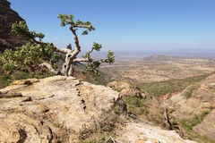 Paysage, Tigray, Ethiopie, Afrique Photo libre de droits