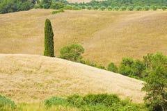 Paysage toscan avec l'arbre de cyprès sur le champ de blé Italie Image libre de droits