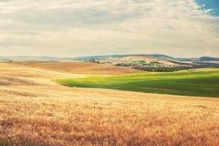 Paysage toscan d'été, champ vert et ciel bleu Photo stock