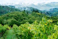 Paysage toscan d'après-midi Images libres de droits