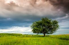 Paysage très beau d'été Arbre dans un domaine avec le nuage foncé Images stock