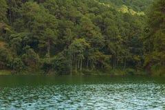Paysage tranquille de forêt de bord de lac Photo libre de droits