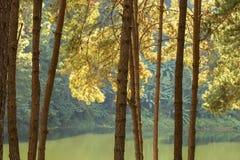 Paysage tranquille de forêt de bord de lac Photographie stock