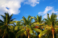 Paysage tropical Photo stock